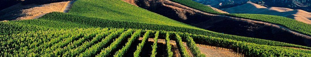 Wandeling door De Wijnwereld